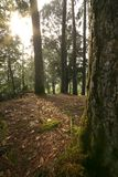 Floresta quieta Fotos de Stock Royalty Free