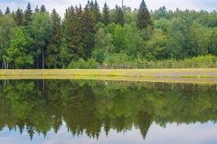 Floresta refletida no lago Imagem de Stock Royalty Free