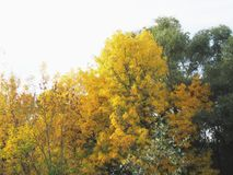 Floresta ribeirinho Imagem de Stock