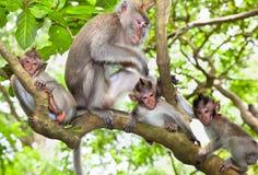 Floresta sagrado em Ubud, Bali do macaco Imagens de Stock