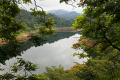 Floresta scenary Imagens de Stock