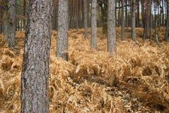 Floresta seca foto de stock