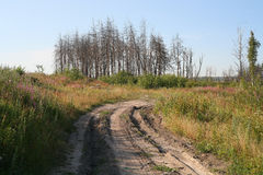 Floresta seca Imagens de Stock Royalty Free