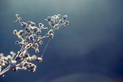 Floresta secada do cerefólio da planta em cores de luzes do outono e em tiros macro Fundo do prado do por do sol Foto de Stock Royalty Free