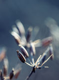 Floresta secada do cerefólio da planta em cores de luzes do outono e em tiros macro Fundo do prado do por do sol Imagens de Stock Royalty Free