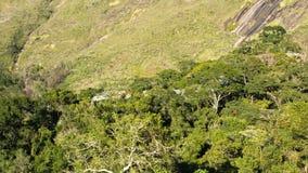 Floresta secundária no domínio atlântico da floresta Imagens de Stock