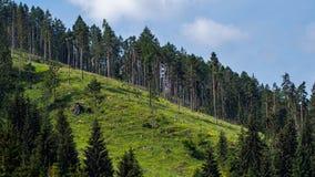 Floresta selvagem Fotografia de Stock Royalty Free