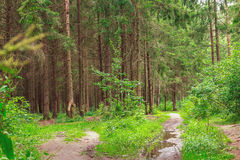Floresta selvagem bonita após a chuva Foto de Stock Royalty Free