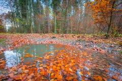 Floresta selvagem bonita da queda com cores vibrantes Fotografia de Stock