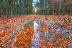 Floresta selvagem bonita da queda com cores vibrantes Fotos de Stock Royalty Free