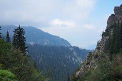 Floresta selvagem em Romênia fotos de stock