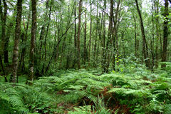 Floresta selvagem verde Fotos de Stock