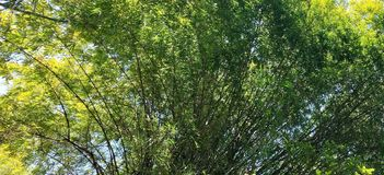 Floresta sem tocar, floresta natural, beleza natural imagem de stock