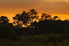 Floresta sempre-verde do monte, parque nacional de Khao Yai, Tailândia Fotos de Stock