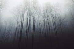 Floresta silenciosa assombrada com névoa através das árvores Fotos de Stock Royalty Free