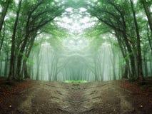 Floresta simétrica com árvores e a estrada verdes imagem de stock