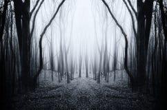 Floresta simétrica surreal com névoa misteriosa imagens de stock royalty free