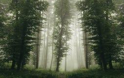 Floresta simétrica verde com névoa grossa Foto de Stock Royalty Free