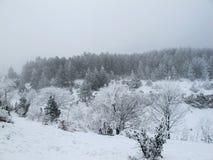 Floresta Snow-covered Foto de Stock