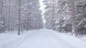 Floresta snow-covered do inverno vídeos de arquivo