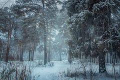 Floresta sob a neve no dia nebuloso imagens de stock royalty free