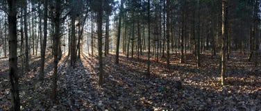 A floresta sombreia o panorama Foto de Stock Royalty Free