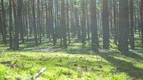 A floresta sombreia o vídeo do timelapse vídeos de arquivo