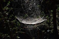 Floresta sombrio da Web de aranha imagens de stock royalty free