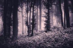 Floresta sombrio de Dia das Bruxas com névoa Imagem de Stock Royalty Free