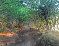 Floresta sonhadora Imagem de Stock
