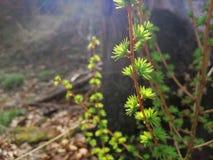 Floresta sonhadora fotografia de stock