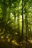 Floresta sonhadora mágica Imagens de Stock