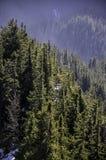 Floresta spruce alpina coberta com os raios da manhã do sol Imagens de Stock Royalty Free