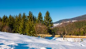 A floresta Spruce em uma neve inclina-se nas montanhas Fotos de Stock