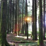 Floresta suíça Foto de Stock Royalty Free