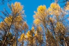 Floresta, Suíça saxão Imagens de Stock