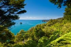 Floresta subtropical de Abel Tasman NP, Nova Zelândia imagens de stock royalty free