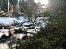 Floresta sueco fotografia de stock