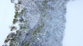 Floresta surpreendente do inverno acima das partes superiores das árvores Imagem bonita do inverno landscape Opinião de árvores e filme