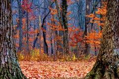 Floresta surreal Fotografia de Stock Royalty Free