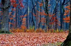 Floresta surreal Imagens de Stock Royalty Free