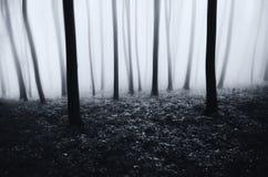 Floresta surreal assombrada com névoa Imagens de Stock