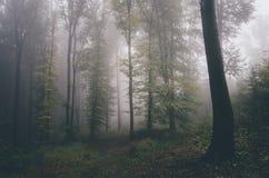 Floresta surreal com névoa no outono Imagens de Stock Royalty Free
