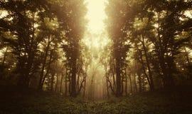 Floresta surreal no nascer do sol Imagens de Stock Royalty Free