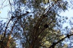 Floresta típica em Galiza imagens de stock royalty free