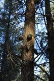 Floresta típica em Galiza fotos de stock royalty free