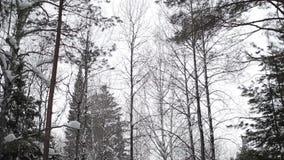 Floresta Taiga do inverno sibéria Árvores video estoque
