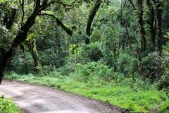 Floresta, Tanzânia Imagem de Stock Royalty Free