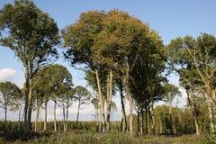 Floresta temperada em França Foto de Stock