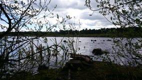 Floresta três Imagem de Stock